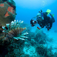 PADI Open Water Diver Course - Private