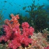 padi-aware-diving-korea-reef-2
