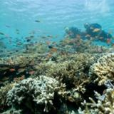 padi-aware-fish-divers-in-full-scuba-gear-hovering-over-reef-to-view-fish